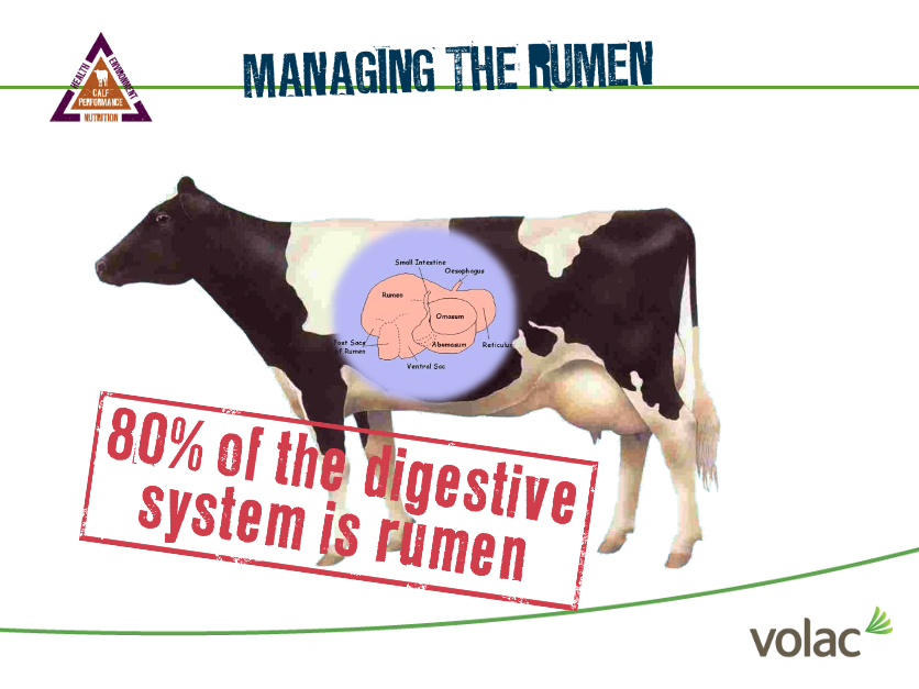 Managing the Rumen